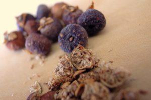 banyan-seeds