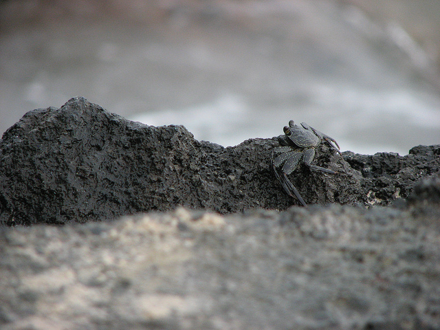alamihi-crab