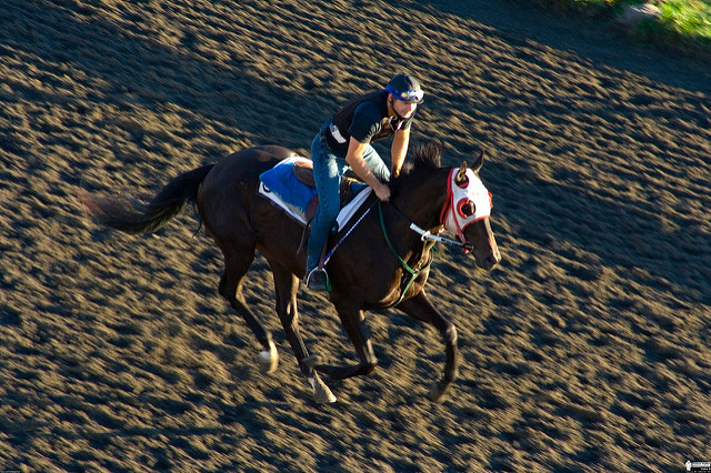 gallop-14