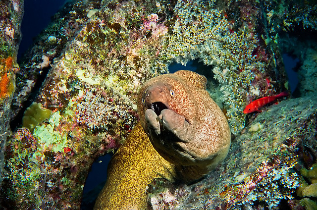 bowser-the-moray-eel