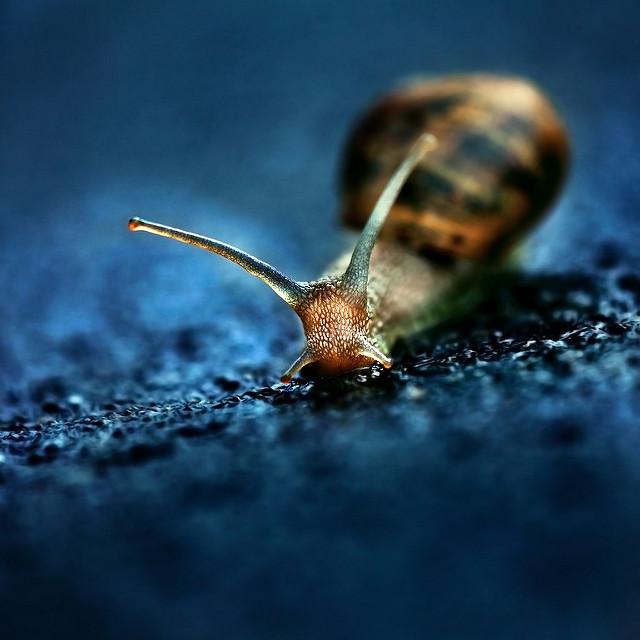 slow-down-snail