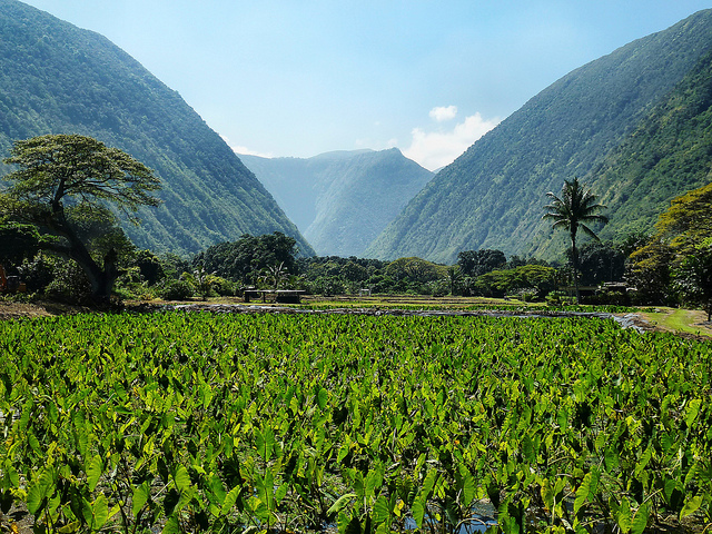 taro-and-valley