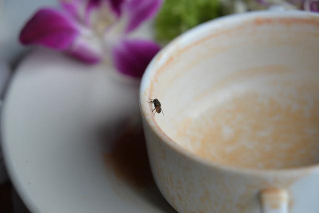 bug-kanchanaburi