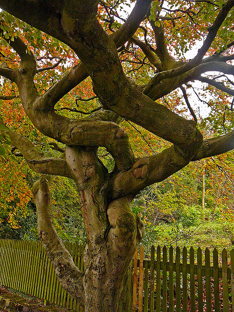 tree-at-chellow-dean