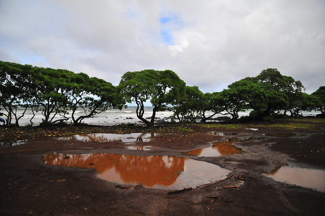 hana-red-mud-green-trees