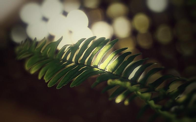 hide-the-light