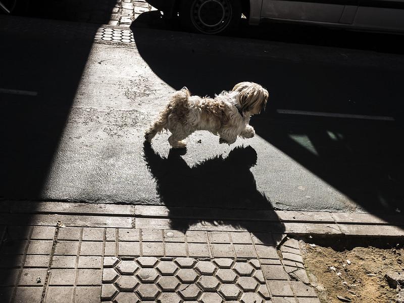 triana-streets-dog